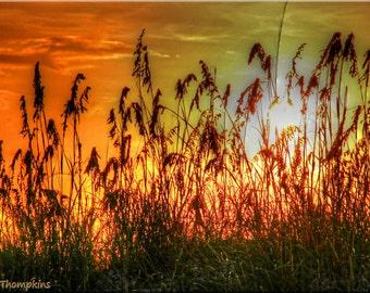 Sunset Tybee Island, Georgia, GA, Golden Yellow, Orange, Sea Oats, Sunset