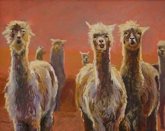 Alpaca Pack- Large Print