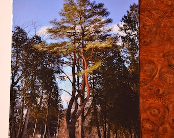 Beautiful Winter Pine Tree Any Occation Greeting Card with Correct Size Envelope