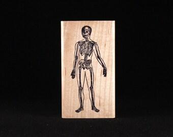 """Skeleton (1.2"""" x 2.9"""")"""