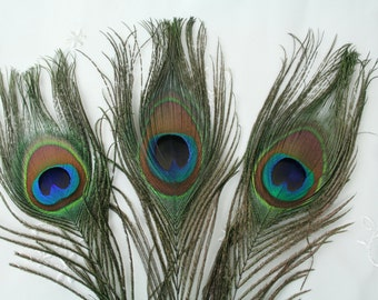 Peacock Tail Feather, Set of 3,  Natural color with blue eye