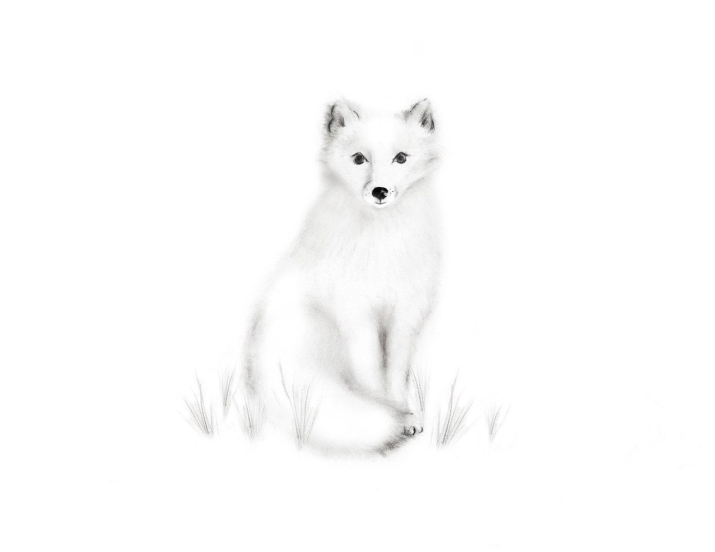 Arctic Fox Nursery Art Pencil Drawing Gender Neutral Baby