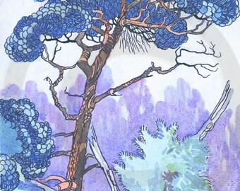 Scots Pine, Pine Tree, Evergreen, 1920s, Print
