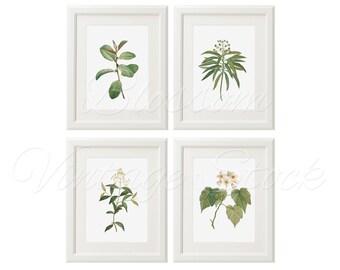 Plants Antique Botanical Print Set, Botanical Prints INSTANT DOWNLOAD Digital Images Vintage Illustrations for Print 5x7, 8x10, 11x14 - 1276