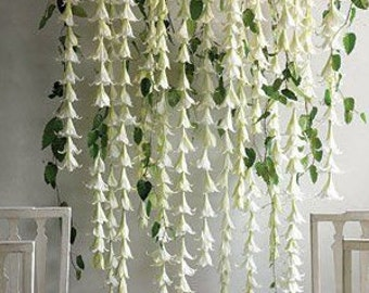 Lily Garland for backdrop- individual strands