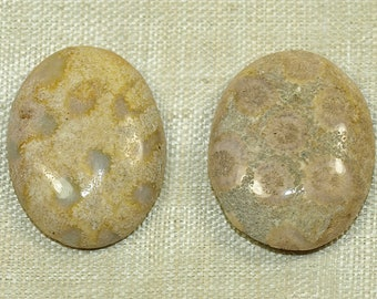 Pair of Fossilized Coral Cabs from the Lou Zeldis Collection; LOUZELDIS2008_E