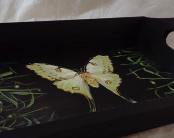 Wooden Tray with a Painted African Comet Moth