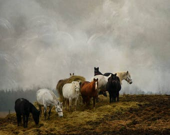 gallery wrap horses country field hill fine art photography animals color