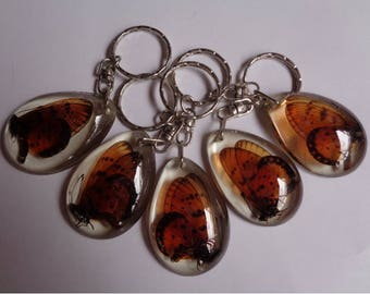 Real 5 pcs Butterflies keychain encased in clear resin