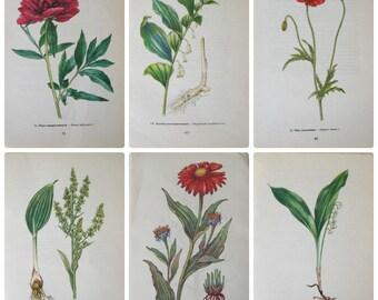 Red Flower Botanical book pages Set of 6 garden book pages floral flowers drawings Botanical drawings WildFlower prints pics Paper Ephemera