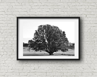 The Tree - Black & White Photograph