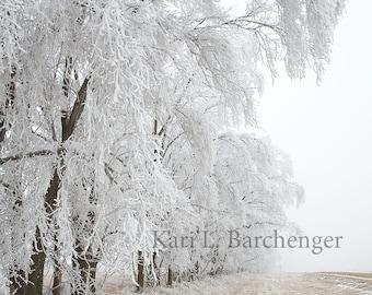 Winter Frost // Prints // Metal Print // Acrylic // Canvas Print // Wall Art