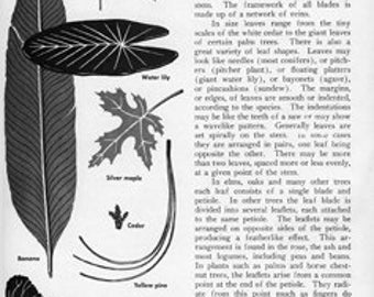 Page From Old Science Textbook Plants Botany Background Texture - Digital Photo Image Vintage - Instant Download