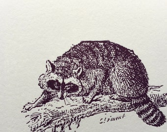 Racoon on branch