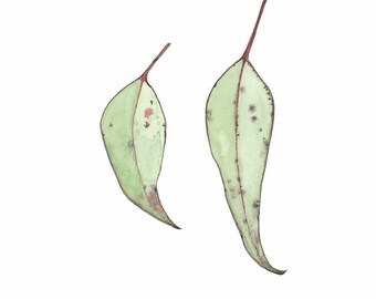 Gum leaf Watercolour, Gum leaves Print, Eucalyptus Leaves, Giclee A3 Print, Botanical Art, Australian Plant Home Decor, Fine Art Print