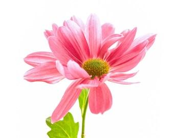Beautiful pink flower closeup