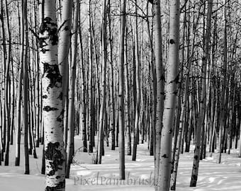 DIGITAL DOWNLOAD, Winter Birch Trees, Nature Image, Winter Scene, Black, White Photo, Snow Shadows, Stock photo, available in print