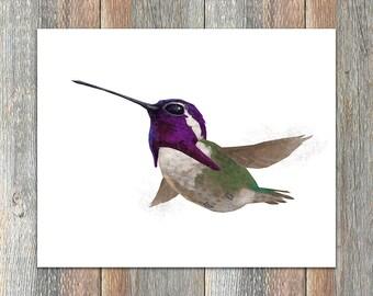 Costa's Hummingbird Bird Print