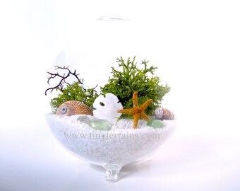 Beach Terrarium Kit Beach Globe Lichen Moss Terrarium White, Natural, Black Sand Beach Decor Gift Ocean Home Decor