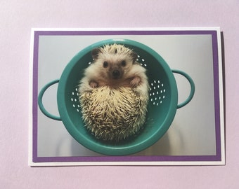 Set of 8 Hedgehog in Strainer folded note card set with envelopes. Inside is blank.