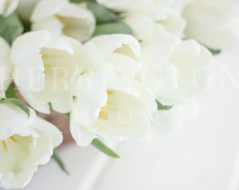White stock photography | Flower stock photo - Tulips stock photo - Spring stock photo - Neutral stock photo - Flower bouquet stock photo