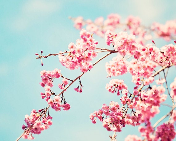Floral photography pink blue nursery aqua flower wall art mightylinksfo Choice Image