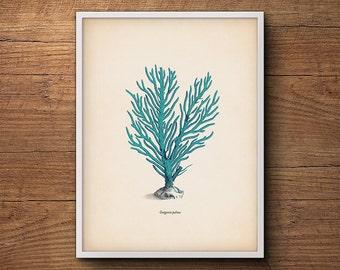 Blue Coral Print, Coastal Beach Print, Large Wall Art, Coastal Wall Print, Sea Coral Prints, Coastal Decor Print, Coral Prints, Coastal Art