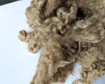 Naturally Dyed Border Leicester Wool Locks - Maple Leaves