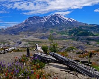 Mount St. Helens with Fallen Logs