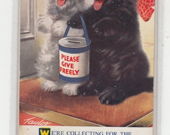 Scarce Westie Dog And Scottish Terrier Dog Collecting For The Dogs' Home Enthusiastic Dogs/Postcard