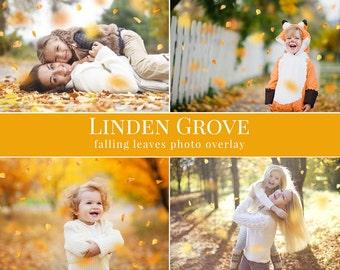 "Fall photo overlays ""Linden Grove"",  falling leaves photo overlay, autumn photo overlays for Photoshop"