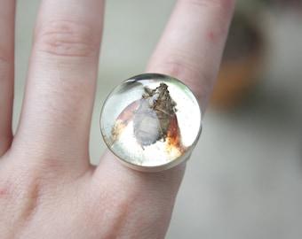 Bug Ring.