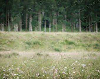 Grassy field trees forest - Digital Photography Backdrop - Composite Background - digital download