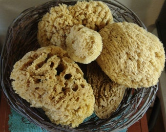 Natural Sea Sponges SM MED LG Bath Beauty Cleaning Nautical Ocean Decor Craft Bathroom Apothecary Display Biodegradable Safe Healthy Living