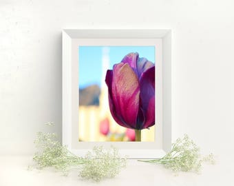 Purple Tulip at the Provo LDS Temple // You get 5 sizes // Instant Digital Download