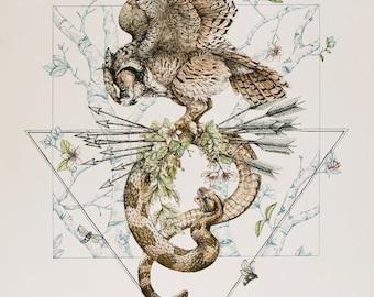 Owl Snake Illustration - 11 x 14 art reproduction