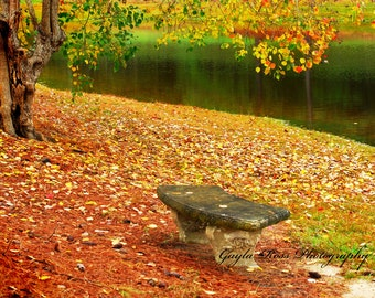 Garden Bench,Fall Wall Art,Autumn Wall Art,Fall leaves,Lake Photography,Outdoors,Nature,Fine Art.Concrete bench,Fall gift, pond,gold,yellow
