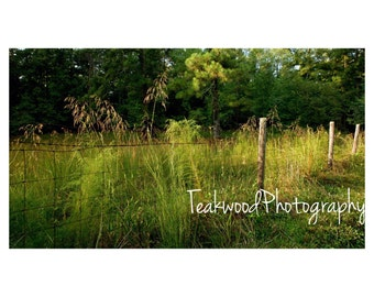 Nature - Country Grass Wall Art Nature Print Photography, Peaceful Landscape Photograph Calm