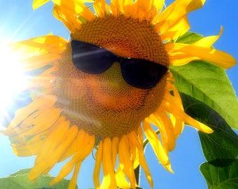 Good Morning Sunshine -  Fine Art Photograph
