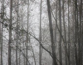 Fog Photo Foggy Forest Fine Art Print Woodland Decor Gray Nature Photo Wall Decor Grey Wall Art Unframed Print, Framed Photo, Canvas Print