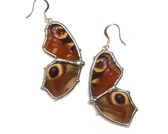 Peacock Butterfly Earrings - Real Butterfly - Nature Insect Jewelry