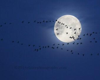 moon, eclipse, geese, wildlife, migration, silhouette, wildlife photography, bird, bird art, night, blue