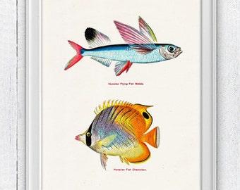 Vintage hawaian  fishes no.01- Home  Wall decor , Sea fish collage- sea life print SAS005