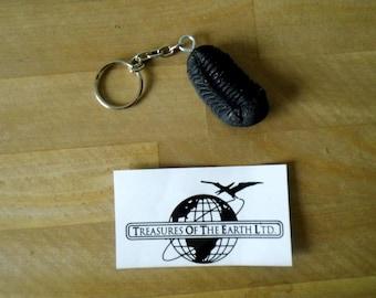 Replica Trilobite Keychain