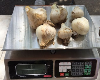 Elephant Garlic Grown in Mississippi USDA Certified Organic (1 lb)