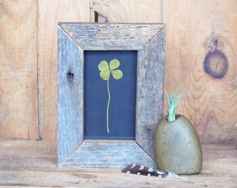 Four Leaf Clover in Handmade Reclaimed Barnboard Wood Frame OOAK Botanical Gift Idea