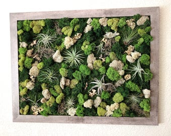 Large Framed Vertical Wall Garden with Multiple Air Plants, Reindeer Moss and Lichen - 4 Frame Color Options