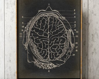 BRAIN ANATOMY POSTER, Brain Face Chart, Scientific Illustration, Anatomical Drawing, Anatomy Print, Medical Art, Doctor, Surgery Art