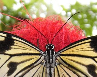 Butterfly Fine Art Photography Print