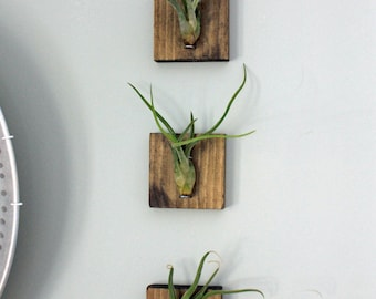 Mounted Air Plants // Medusa's Head // Living Art // Uniqe Wall Decor // Set of Three,